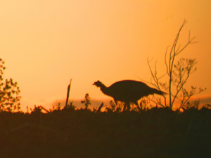 New wisconsin state budget eliminates carcass tags for deer and turkeys registration of canada for Wisconsin exterior goose season
