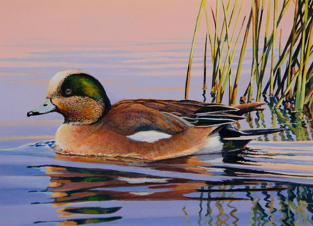 Artists Can Submit Designs For Minnesota Waterfowl Stamp