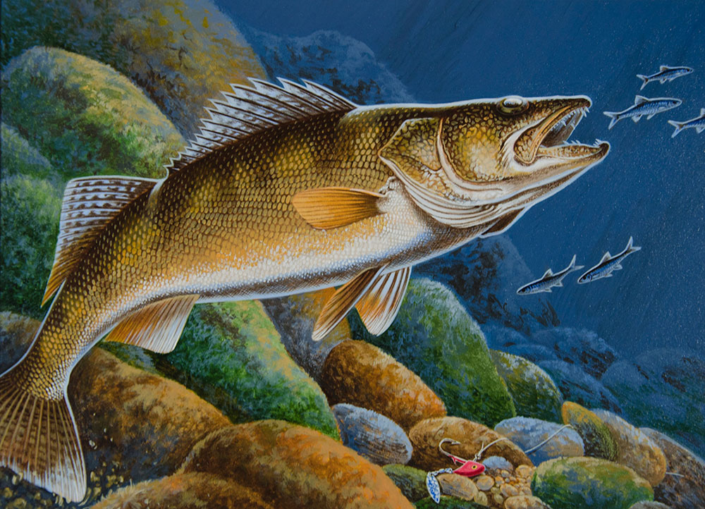 Dnr seeks designs for 2018 minnesota walleye stamp for What fish is this