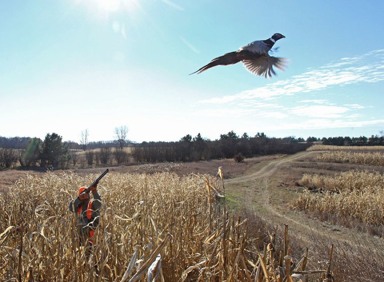 Drop in south dakota pheasant licenses means 39 substantial for Sd fishing license