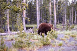 Montana Officials Seek Information On Dead Grizzly Hikers Shoot