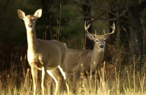 Involve real people again in Wisconsin deer hunting and perhaps bring back some tradition - Outdoornews