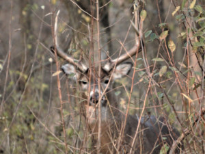 Save your deer for the hunt - Outdoornews