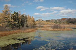 Fall Colors Northern Wetland