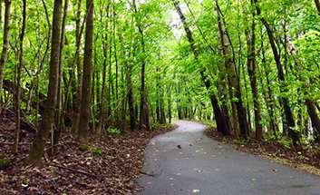 Paved Trail Photo Copy Crop