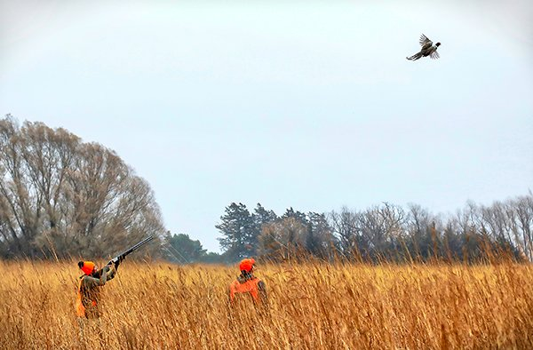 Pheasant Hunting 08 2d1a0925 Billdiersphoto2018