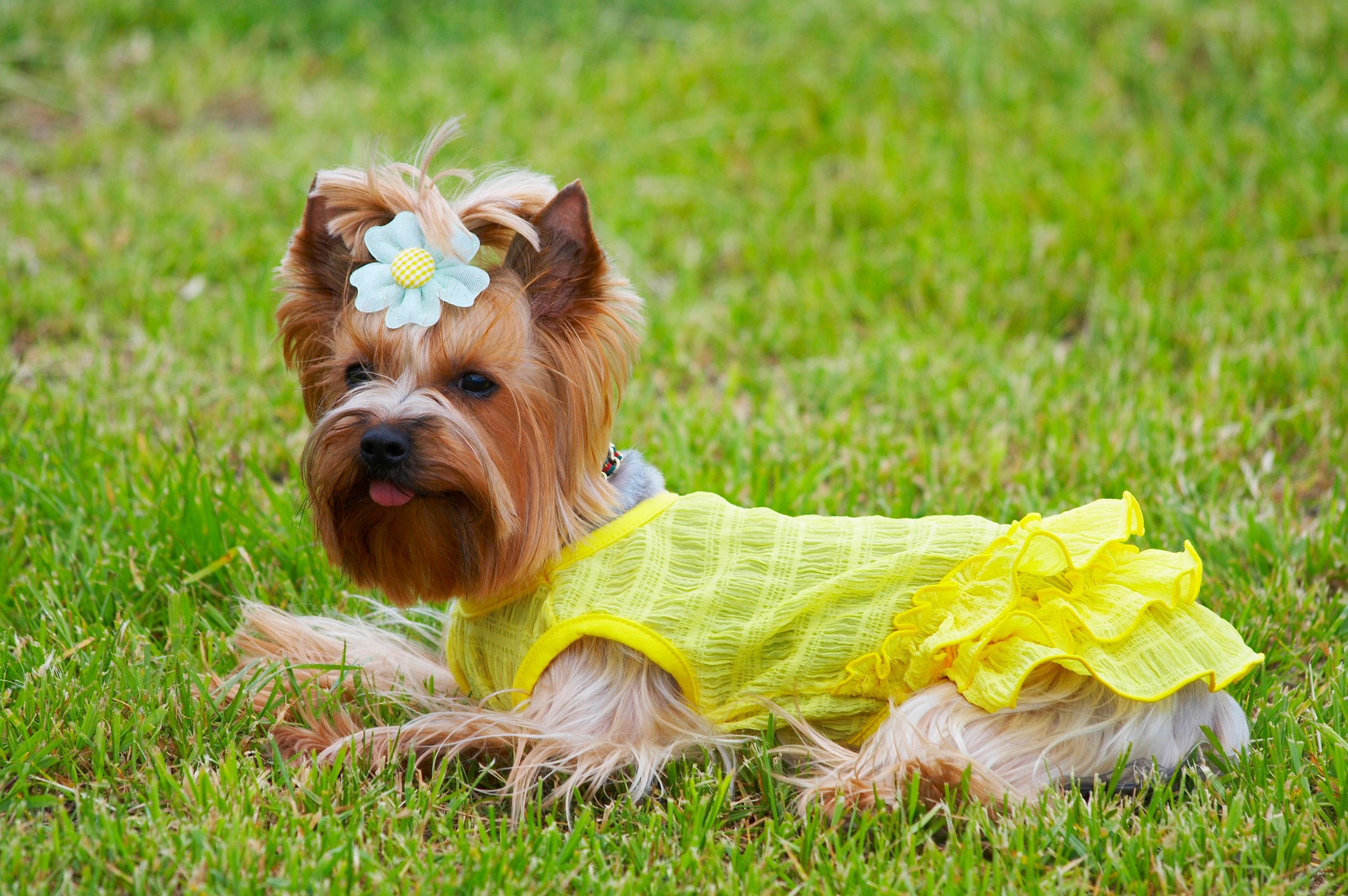 Dog Show In Warwick Ri