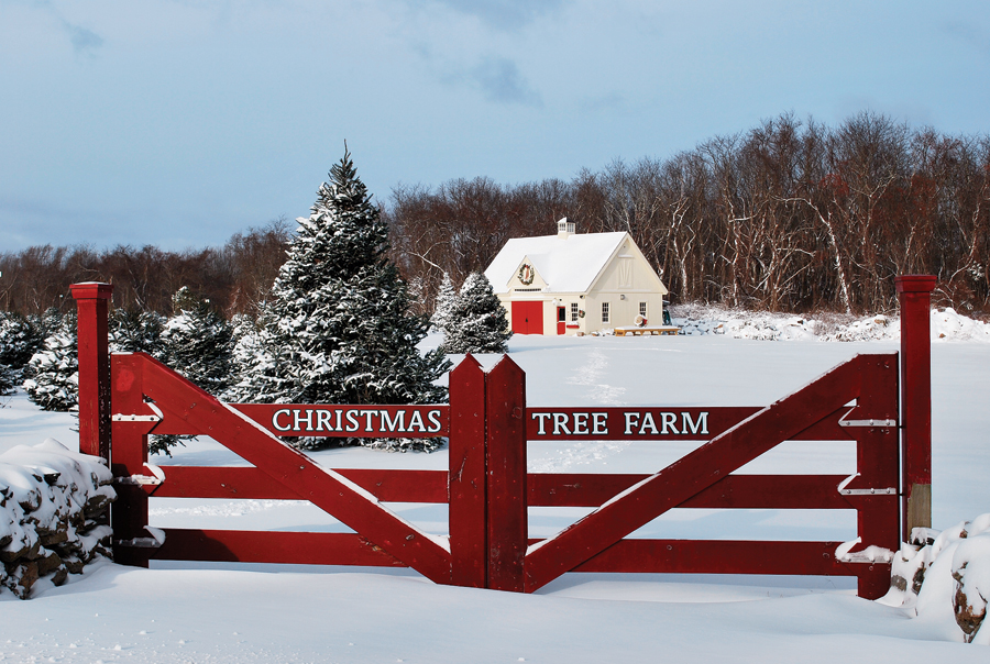 Christmas Tree Farms In Ri