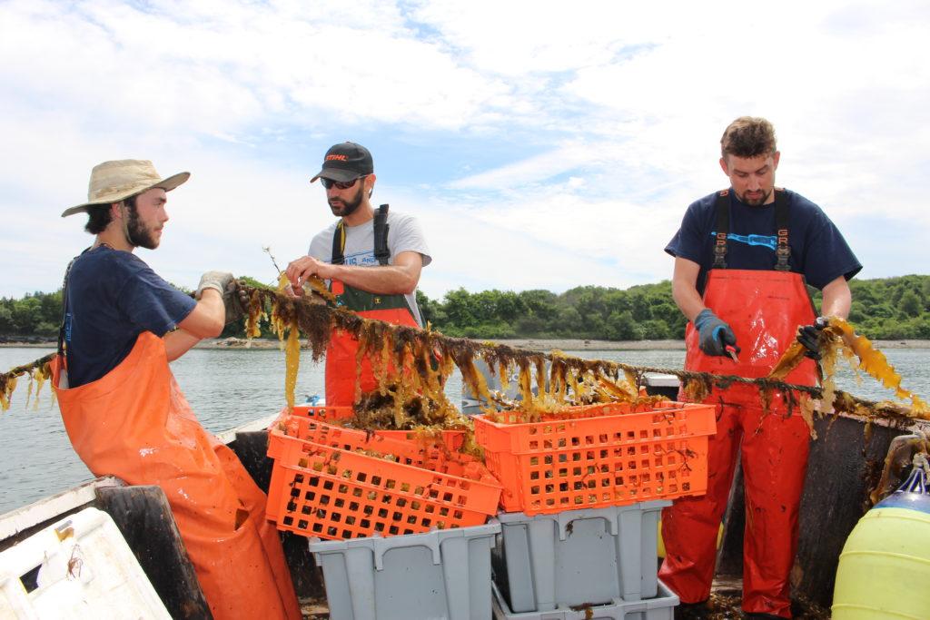 The Dish: Meet Rhode Island's First Commercial Kelp Farmers - Rhode