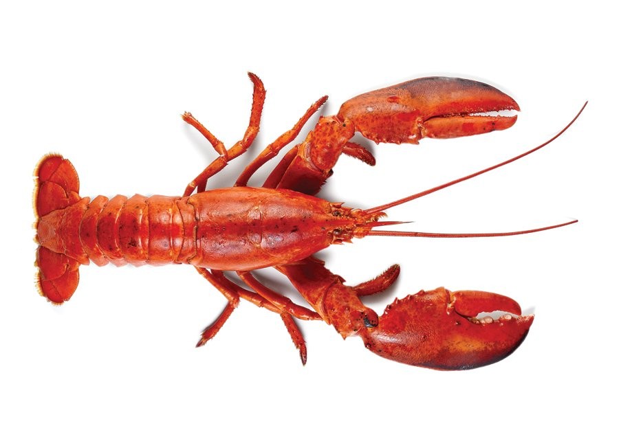 Lobster Facts - Rhode Island Monthly