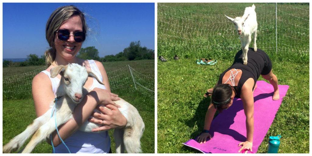 Try Goat Yoga at Rhode Island's Own Simmons Farm - Rhode Island Monthly