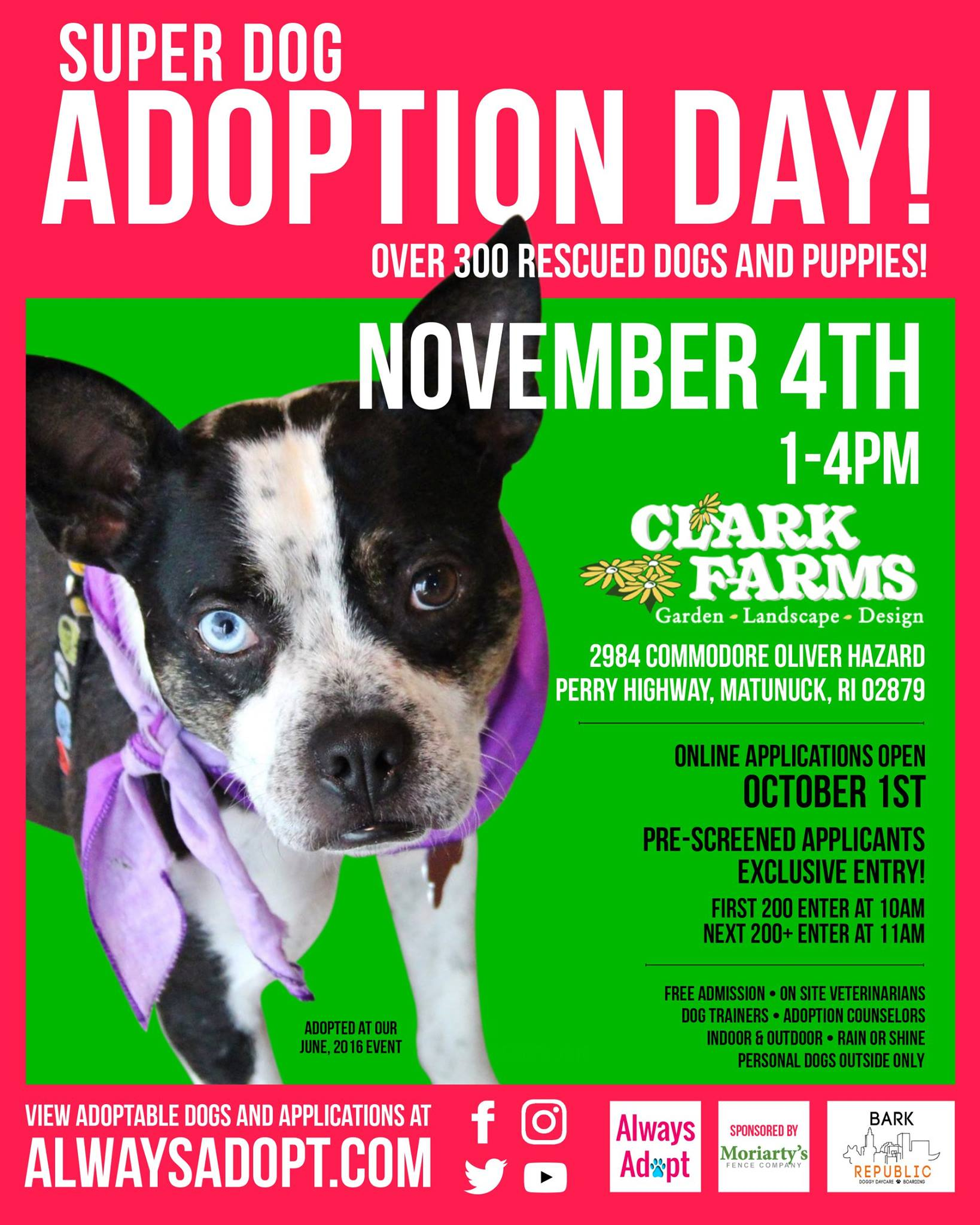 Super Dog Adoption Day Rhode Island Monthly