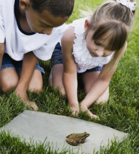 Become a FrogWatcher @ Roger Williams Park Zoo   Providence   Rhode Island   United States