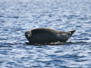 Fall River Seal Cruises with Save The Bay @ Borden Light Marina | Fall River | Massachusetts | United States