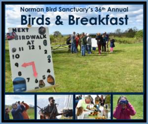Norman Bird Sanctuary's Spring Migration Ecotour @ Norman Bird Sanctuary