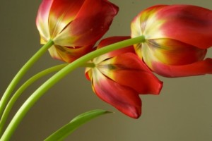 Flower Photography with Jan Armor @ Blithewold Mansion, Gardens, and Arboretum