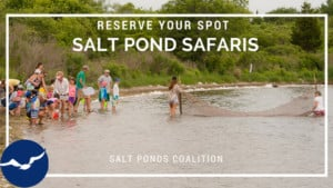 Salt Pond Safari @ Ninigret  Pond, National Wildlife Refuge