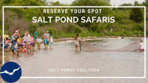 Salt Pond Safari @ Ninigret Wildlife Park and Refuge