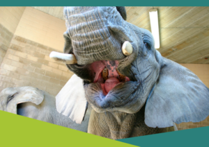 Celebrate World Elephant Day @ Roger Williams Park Zoo | Rochester | New York | United States