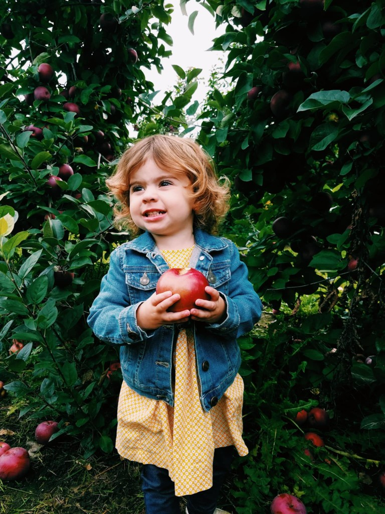 11 Places to go Apple Picking in Rhode Island - Rhode Island Monthly