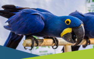 Margaritas and Macaws: Young Professionals Night @ Roger Williams Park Zoo | Providence | Rhode Island | United States