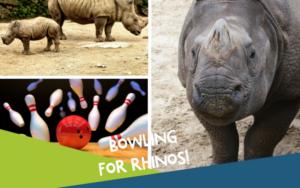 Bowling for Rhinos at AMF Cranston Lanes @ AMF Bowling Cranston Lanes | Cranston | Rhode Island | United States