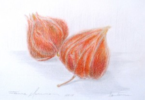 Beginner Botanical Drawing Series: Seeds and Cones @ Blithewold Mansion, Gardens, and Arboretum   Bristol   Rhode Island   United States