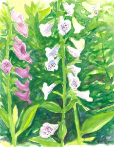 Botanical Watercolor with Elizabeth OConnell @ The Bristol Art Museum | Bristol | Rhode Island | United States