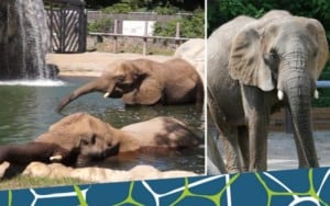 Breakfast with the Elephants @ Roger Williams Park Zoo | Providence | Rhode Island | United States