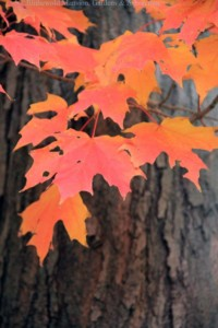 Foundations in Gardening: Fall in the Garden @ Blithewold Mansion, Gardens, and Arboretum | Bristol | Rhode Island | United States