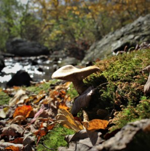 Guided Mushroom Hunt @ Norman Bird Sanctuary | Middletown | Rhode Island | United States