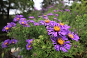 Fall Wildflower Walk @ Norman Bird Sanctuary | Middletown | Rhode Island | United States