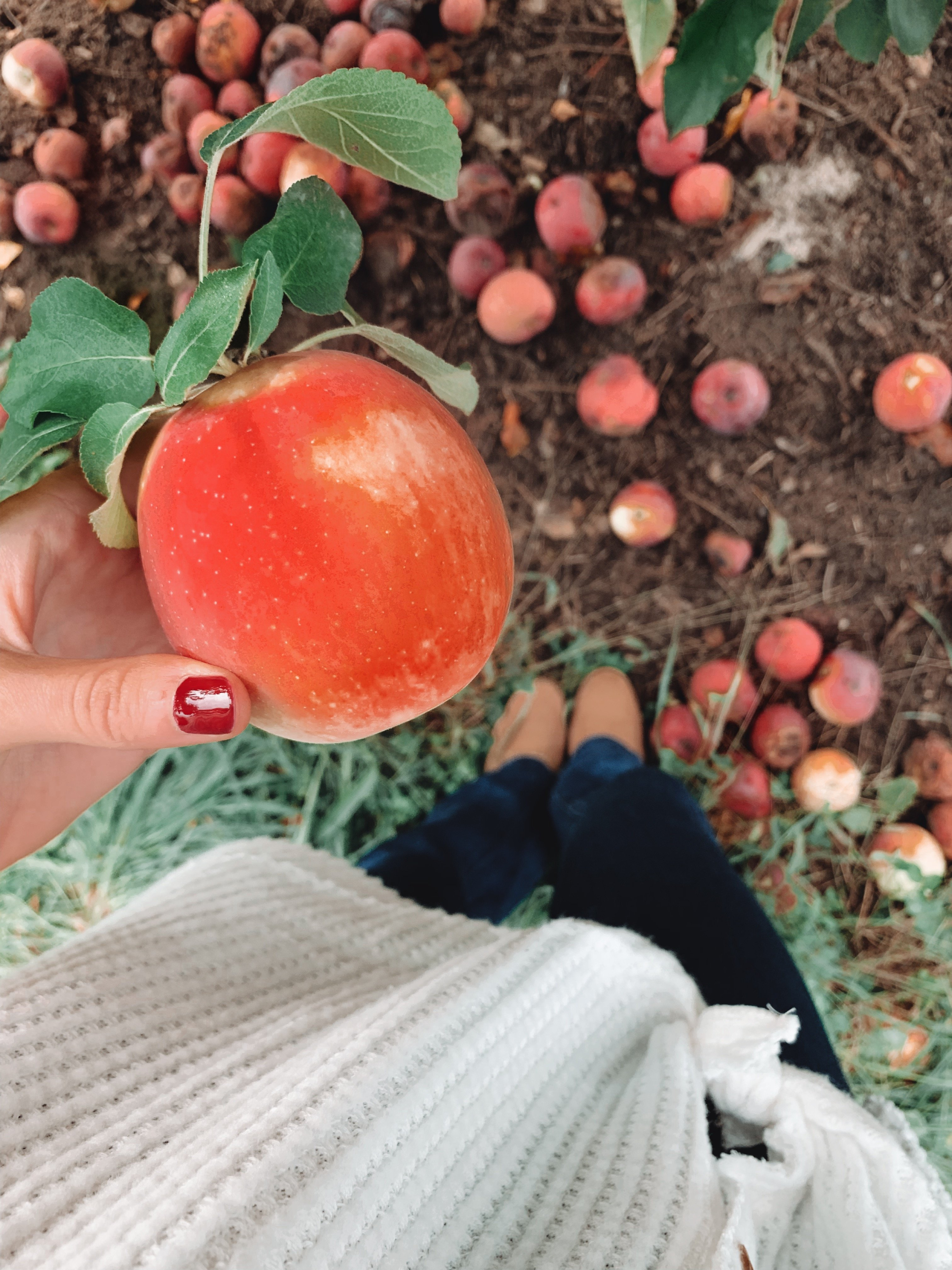 10 Places to go Apple Picking in Rhode Island - Rhode Island
