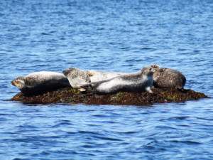 Newport Seal Tours with Save The Bay @ Bowen's Ferry Landing   Newport   Rhode Island   United States