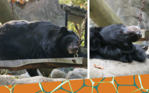 Breakfast with the Moon Bears @ Roger Williams Park Zoo | Providence | Rhode Island | United States