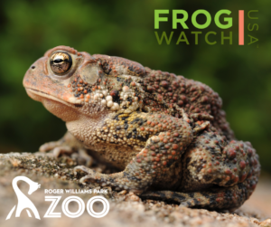Be a FrogWatcher! FrogWatch USA Training @ Roger Williams Park Zoo | Providence | Rhode Island | United States