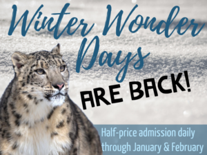 Winter Wonder Days at Roger Williams Park Zoo @ Roger Williams Park Zoo | Providence | Rhode Island | United States