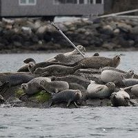 Seal Tours @ Seal Tours | North Kingstown | Rhode Island | United States