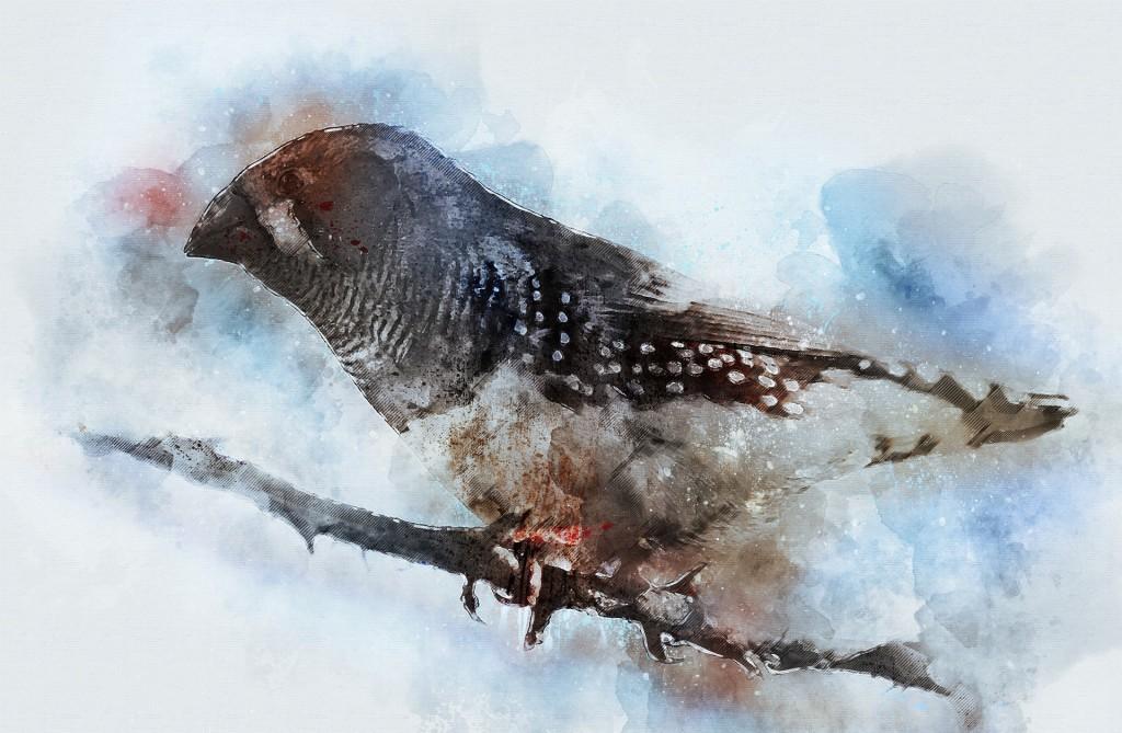 Bird 4790816 1920