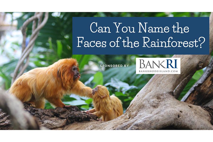Zoo Bankri