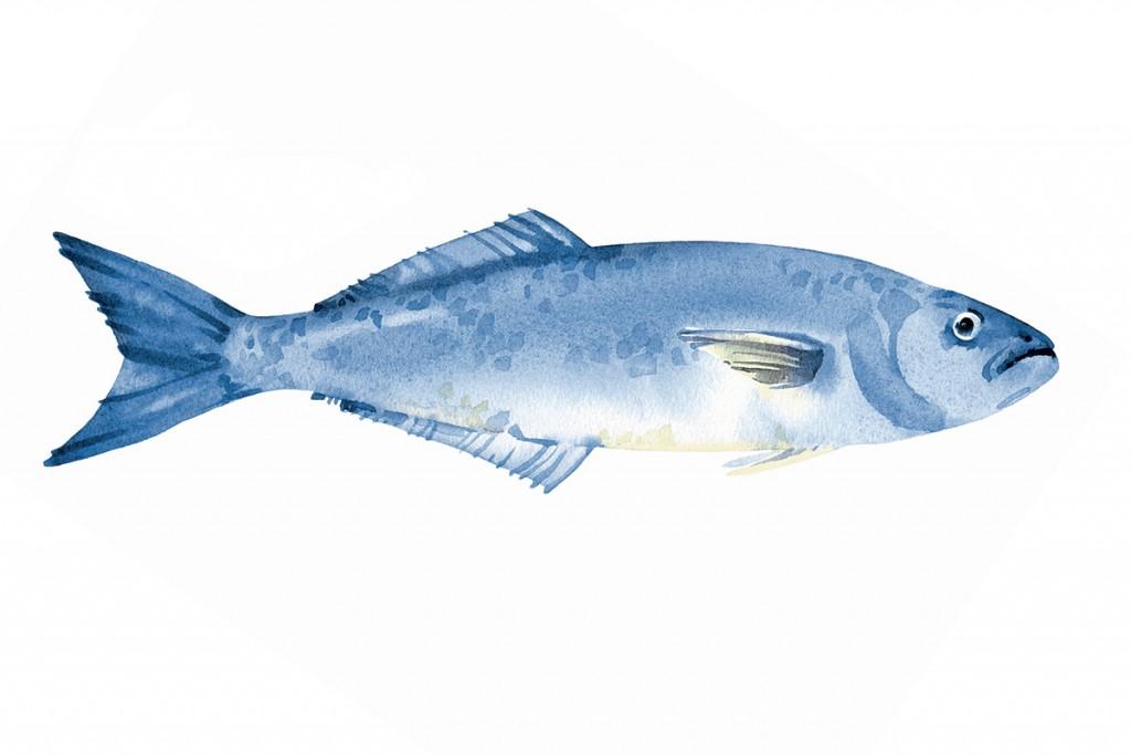 Mr21ec27fish