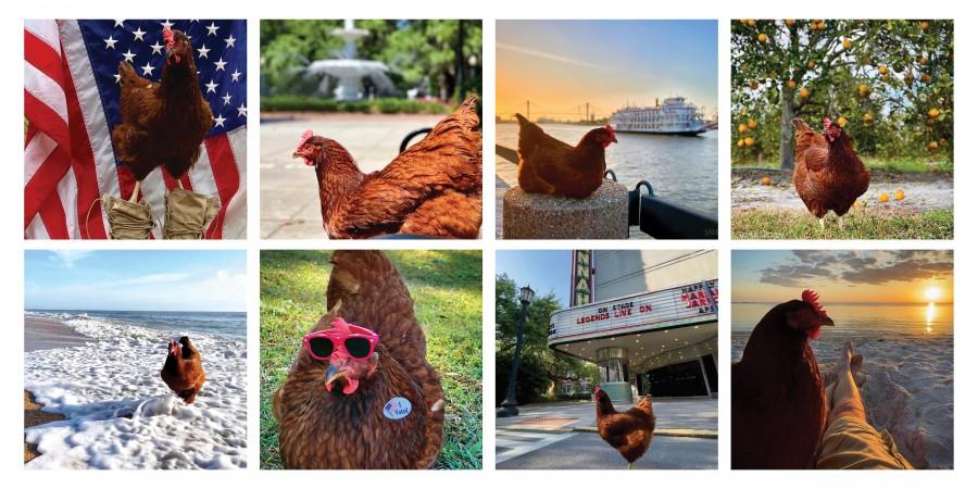 Sammi Chicken Grid Ig Layout Copy