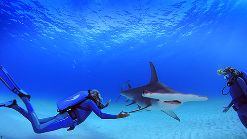 Cousteau Hammerhead
