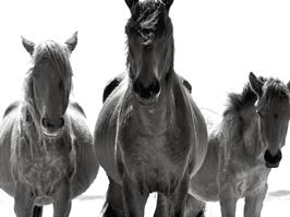 Horsethumb